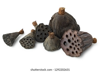 Dry lotus heads with seeds on white background.