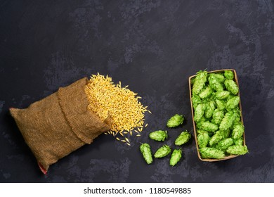 Dry malt beans and green fresh hop cones ready to be used to brew the craft beer. malt of barley for craft beer.concept of healthy and wholesome ingredients