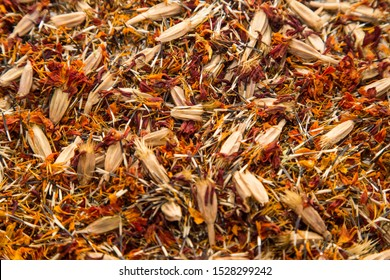 dry marigold seeds lying on a flat surface for the background, having brown, red, orange colors