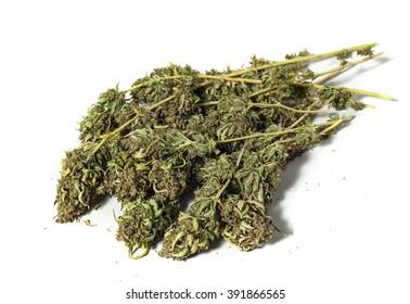 dry marijuana plant