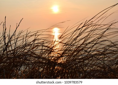Dry marram grass swaying in the breeze at sunset and sunlight reflection on Baltic sea water. Harmony of silence.