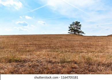Dry Meadow in the Czech Republic. Hot summer day on the pasture. Lack of rain. Dry farm. Climate change