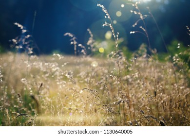 a dry meadow grass