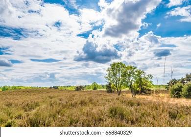 Dry meadow in summer arid landscape blue sky