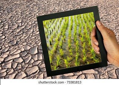 Dry mud fields after the water in the dry lake. In the summer, farmers can not farm. So let the dry ground crack.