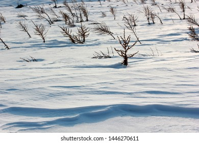 dry mullein plant on snow