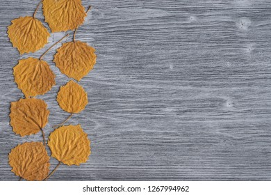 Dry natural yellow leaves of quaking asp   tree on gray wooden background. Top view