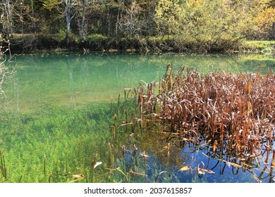 Dry orange grass above the river surface, natural green water color.