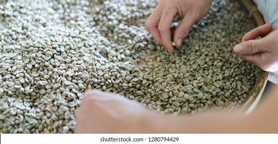 dry organic green bean selecting in coffee milling process, selective focus