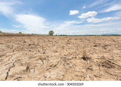 Dry paddy field with blue sky and white clouds