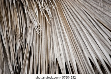 Dry palm fronds