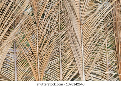 Dry palm leaves