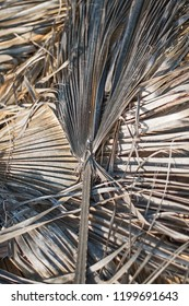Dry palm leaves.