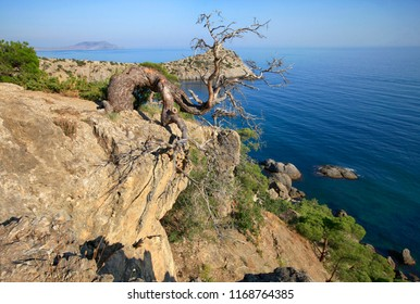 Dry pine tree on a rock above the sea, beautiful natural landscape