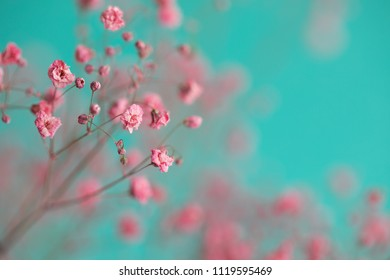 Dry pink baby's breath flowers against a teal background