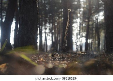 Dry plant in the forest under the sunlight.