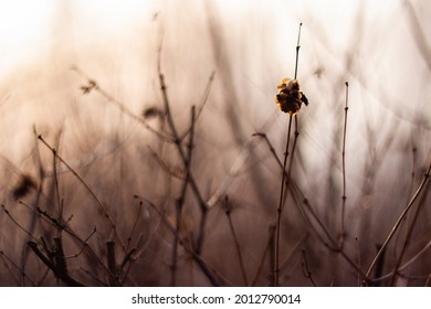 Dry plant with gloomy autumn thicket background close up