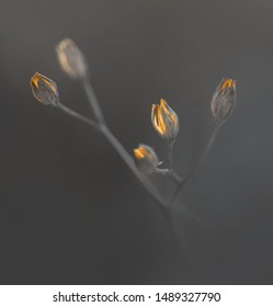 dry plant on gray background with reflection of ecening winter sunlight