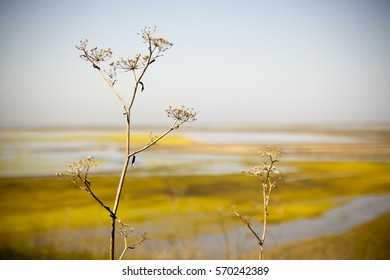 Dry plant sits with dry autumn wetland in the background