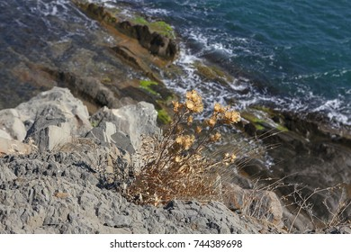 dry plants on the cliff