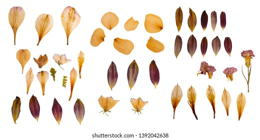 Dry and pressed flower petals. Herbarium. Dry plants. Petals set