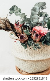 Dry Protea flowers with eucalyptus  on light background