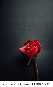 dry red rose on black background