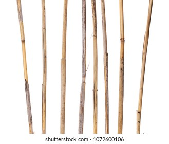 dry reed sticks isolated on white, clipping path