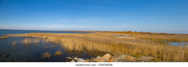 dry reeds by the lake