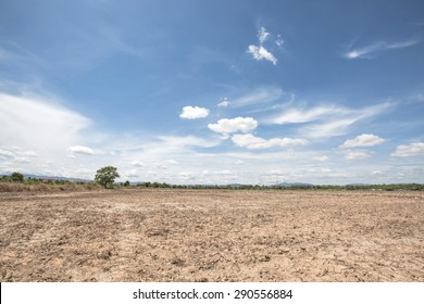 Dry rice paddy field after harvest with blue sky