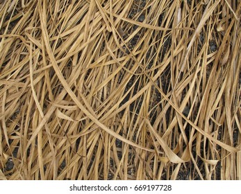 Dry rice straw.