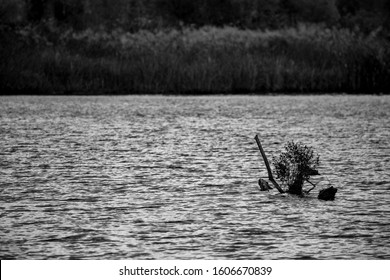 Dry river water tree branches in a lake, calm water, late autumn, black and white. Fairy-tail shapes. Photograph taken at Zlato Pole village near Maritsa river valley, Bulgaria, cloudy day - Shutterstock ID 1606670839