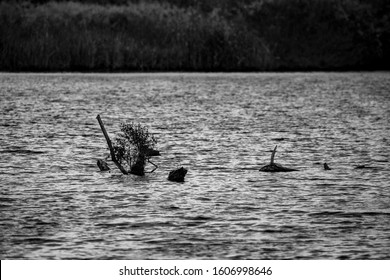 Dry river water tree branches in a lake, calm water, late autumn, black and white. Fairy-tail shapes. Photograph taken at Zlato Pole village near Maritsa river valley, Bulgaria, cloudy day - Shutterstock ID 1606998646