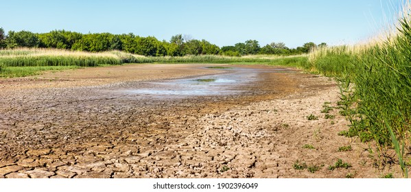 Dry riverbed with water remnant in puddles and cracked soil in hot summer time. Green forest and reed thickets on sides of waterless river in drought.