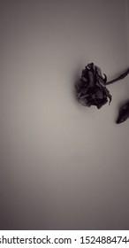 Dry Rose Background Feeling Sad Depression Stock Photo Edit Now 1524884744