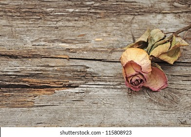 Dry rose on old wood background with copy space