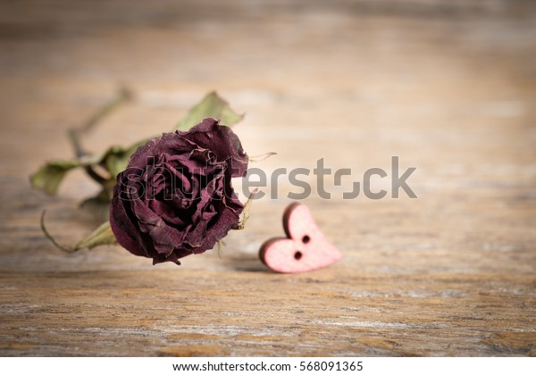 Dry roses on wood decay,  Selective focus.