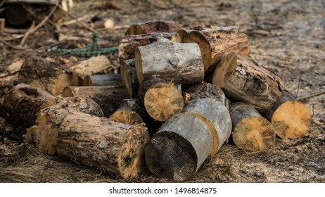 Dry sawn tree trunks lie on the ground in the village. Winter season. Web banner.