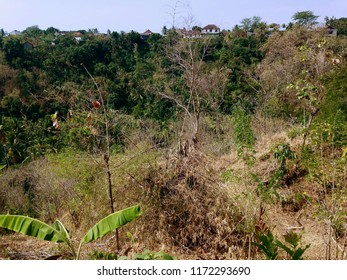 Dry Season Scenery In The Plant Fields At Banjar Kuwum, Ringdikit, North Bali, Indonesia