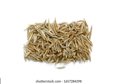 Dry seeds of the Festuca rubra L.  plant