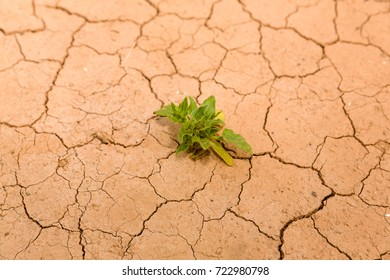 Dry soil with a small plant