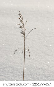 Dry spike in a snowdrift