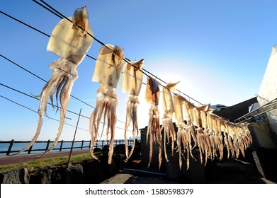dry squids in the fisherman village of South Korea