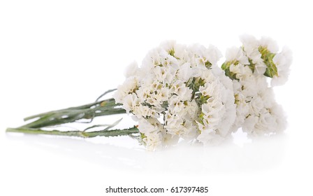 White statice flower images stock photos vectors shutterstock dry statice flower on white background mightylinksfo Images