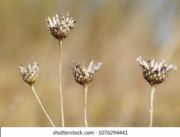 Dry stems of plants.They grow up in a wild field.