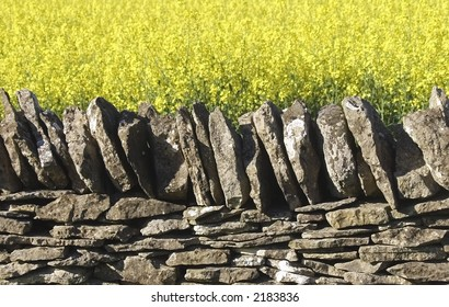 dry stone wall field of oil seed rapeseed cotswolds uk