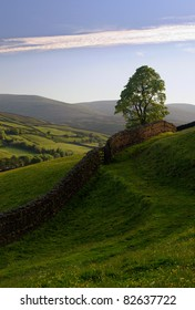 Dry stone wall and lone tree in the Yorkshire Dales