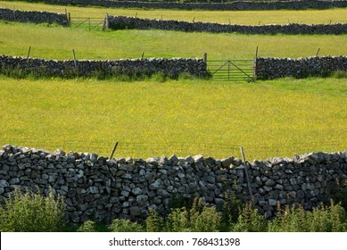 Dry stone walls and meadows in flower, in Littondale in summer, in the Yorkshire Dales, UK