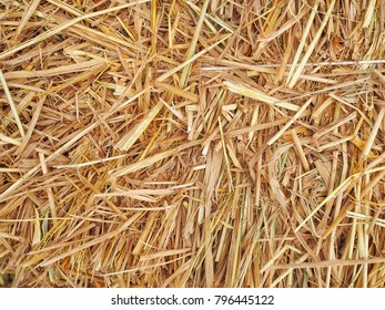 Dry straw bales background in countryside