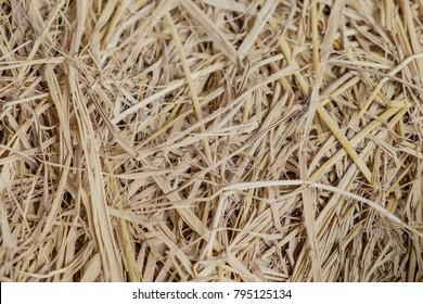 Dry straw texture